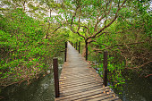 Long wooden walkway in mangrove forest in Thailand.