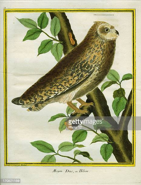 Longeared Owl Asio otusLongeared OwlGeorgesLouis Leclerc Comte of Buffon 'Natural History of birds fish insects and reptiles' coloured and engraved...