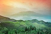 Longji terraced fields in China