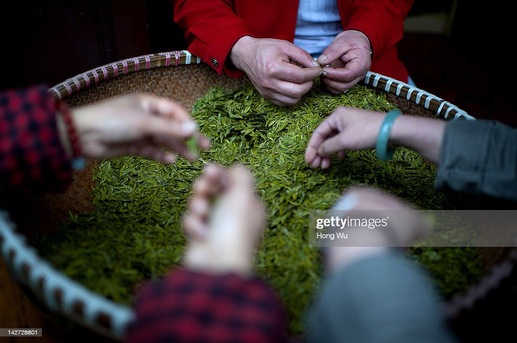 Longjing tea are screened by farmers's hands at Meijiawu Village on March 29, 2012 in Hangzhou, China. Longjing is a green-tea, often called Dragon Well tea. The tea is typically picked by hand, and is of a high quality, earning the title of China Famous Tea. The Longjing tea begins to pluck before Chinese traditional Qingming Festival, the 15th day from the Spring Equinox or usually occurring around April 5. Many Chinese migrant workers from Jiangsu, Anhui, Jiangxi and other neighboring provices have been employed with 80 RMB yuan(US$12.68) to 120 RMB yuan(US$ 19.03) per day to pluck fresh Longjing tea leaves for villagers in many Longjing tea production villages in the outskirts of Hangzhou. The price of Longjing tea rose in recent years which aims to become to luxury goods. A high-end Longjing tea in Hangzhou sold for 50,000 RMB yuan(US$ 7930) half a kilo in 2012, the price rose 70 times in the last 12 years.