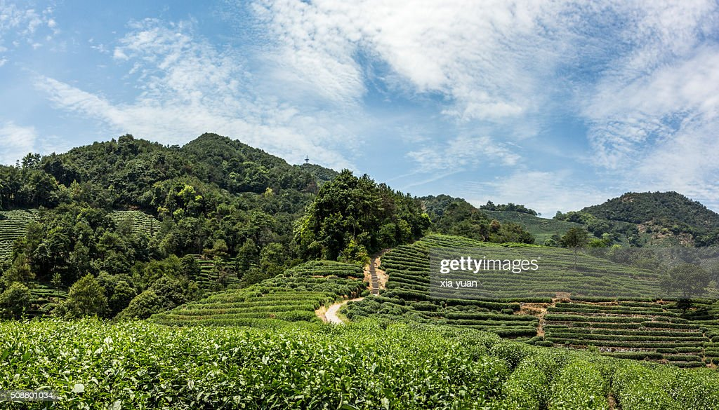 Longjing village and Tea Plantations in Mountains,Hangzhou,Zhejiang,China : Foto de stock