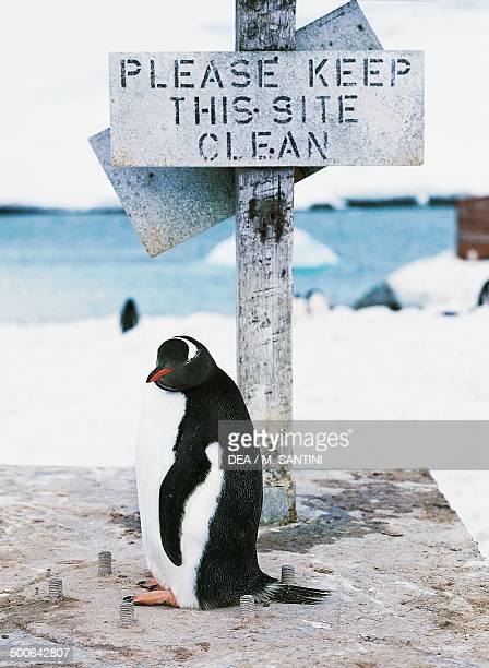 Longtailed Gentoo penguin near a signboard Petermann Island Antarctic Peninsula Antarctica