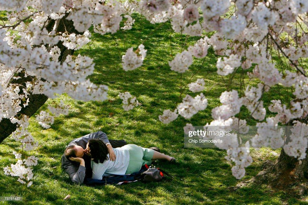 Lonnie Hayter of Arlington Texas and Larissa Aviles of Alexandria Virginia share a kiss under a canopy of cherry blossoms near the Tidal Basin March...