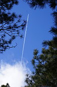 There's a plane between those trees. The plane left a very long contrail once out of the clouds.