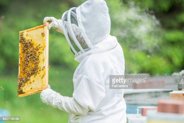Looking At A Beehive