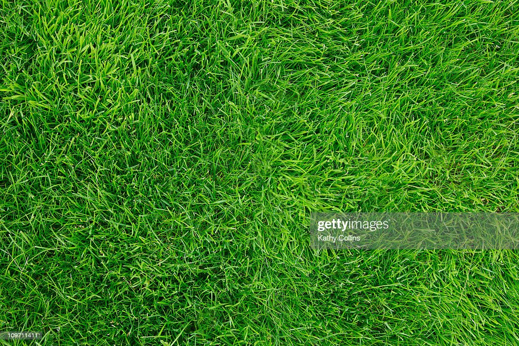 Looking down on freshly mown grass : Stock Photo