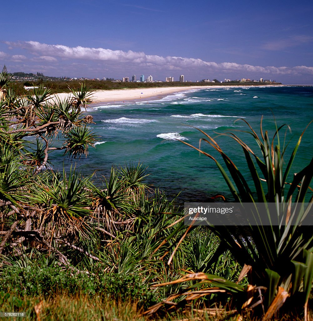 Looking north to the natural ocean beach with Pandanus headland vegetation and Coolangatta/Tweed Heads in the background The international tourist...