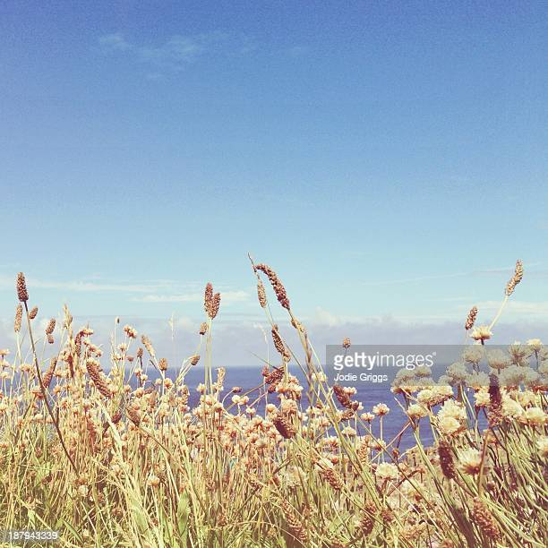 Looking over grass towards ocean and sky beyond