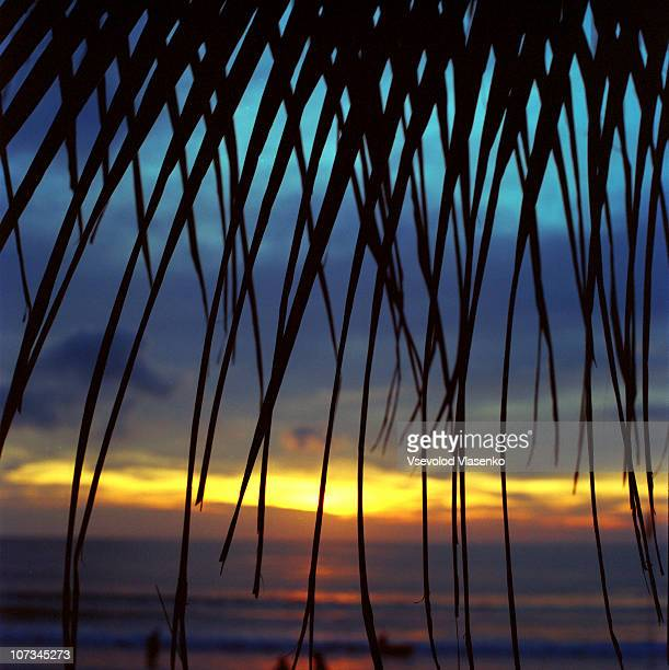 Looking sunset through palm trees
