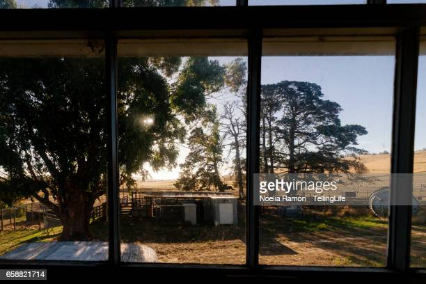 Looking through the window: sunlight and a tree in a farm, Victoria, Australia