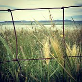 Looking through wire fence towards the ocean