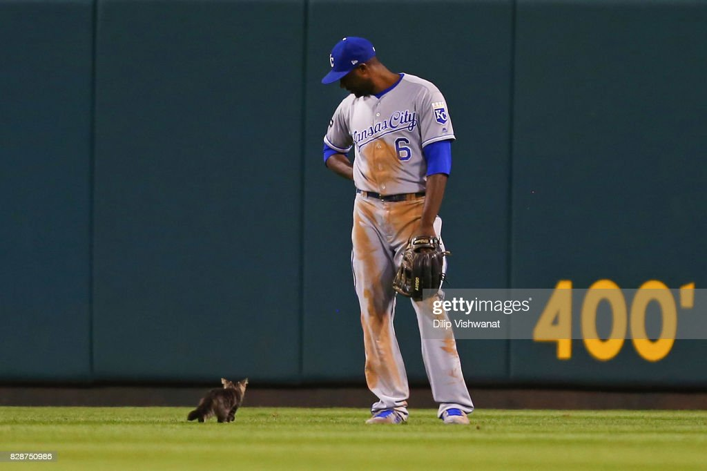 Lorenzo Cain #6 of the Kansas City Royals watches a kitten run across the outfield in the sixth inning during a game against the St. Louis Cardinals at Busch Stadium on August 9, 2017 in St. Louis, Missouri.