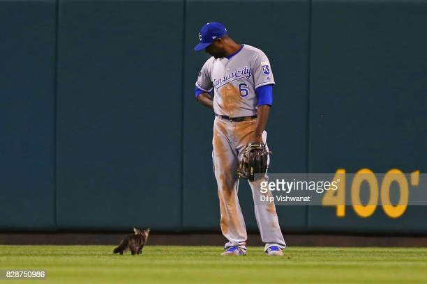 Lorenzo Cain of the Kansas City Royals watches a kitten run across the outfield in the sixth inning during a game against the St Louis Cardinals at...