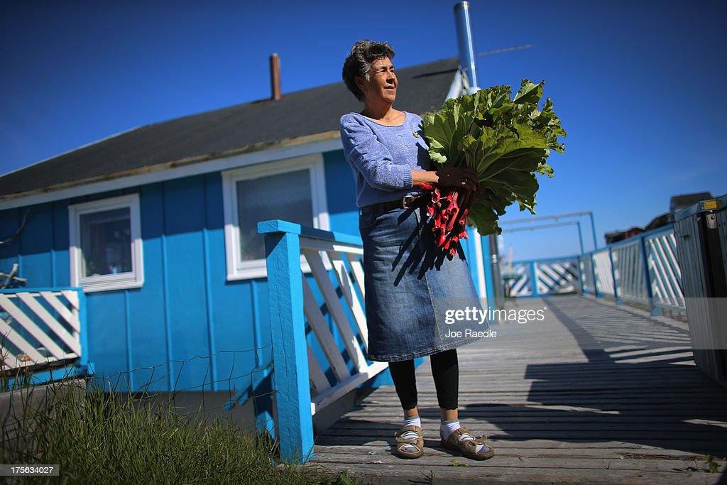 Loretta Henriksen holds the rhubarb she gathered from the garden in front of her home on July 27, 2013 in Nuuk, Greenland. Nuuk, the capital of the country of about 56,000 people, is where the government is trying to balance the discovery of minerals and other new opportunities brought on by climate change with the old ways of doing things. Premier Aleqa Hammond, the leader of Greenlands Parliament, said: 'Climate change is one of the major issues that were dealing with in the political Greenland, in the cultural Greenland and in the business sector of Greenland. Climate change is not only a bad thing for Greenland. Climate change has resulted in many other new options for Greenland.