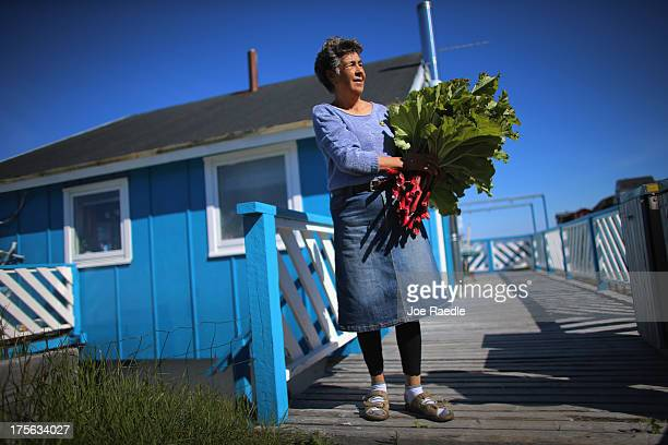 Loretta Henriksen holds the rhubarb she gathered from the garden in front of her home on July 27 2013 in Nuuk Greenland Nuuk the capital of the...