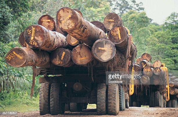 Lorries carrying logs on Sabahs main logging track close to the Kalimantan border,Borneo