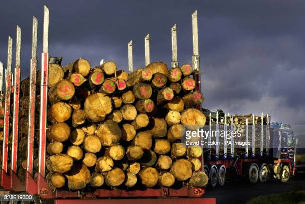 A lorry takes away wood from a forest in the Scottish Borders Scotland is the most wooded area in the UK and one of the fastest expanding areas of...