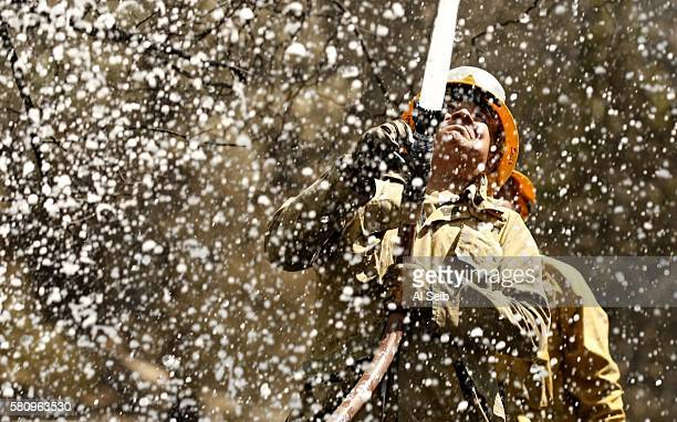 Los Angeles County Firefighter Ralph Solis on Engine 127 sprays foam onto a tree still smoldering from the intense firefight along Soledad Canyon...