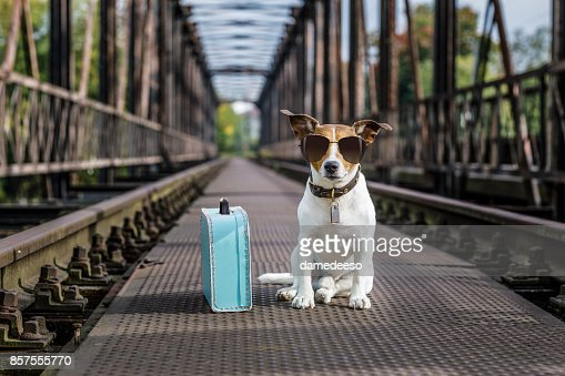 lost  and homeless abandoned dog : Stock Photo