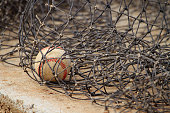 A lone baseball cought in a net.