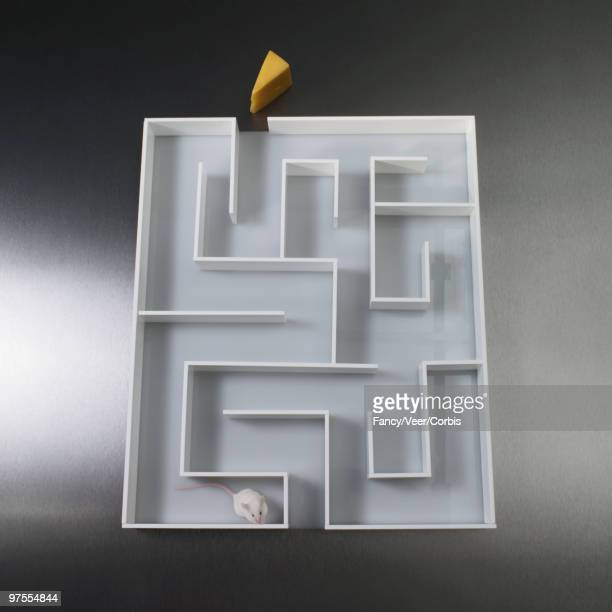 Lost Mouse in Maze