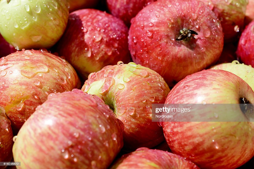 lot of red ripe apples covered with transparent water droplets. : Stock-Foto