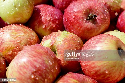lot of red ripe apples covered with transparent water droplets. : Foto de stock