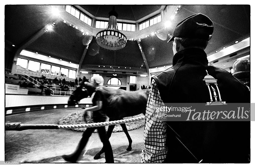 Lot136 walks around the sales ring at Tattersalls yearling sales on October 08, 2013 in Newmarket, England.