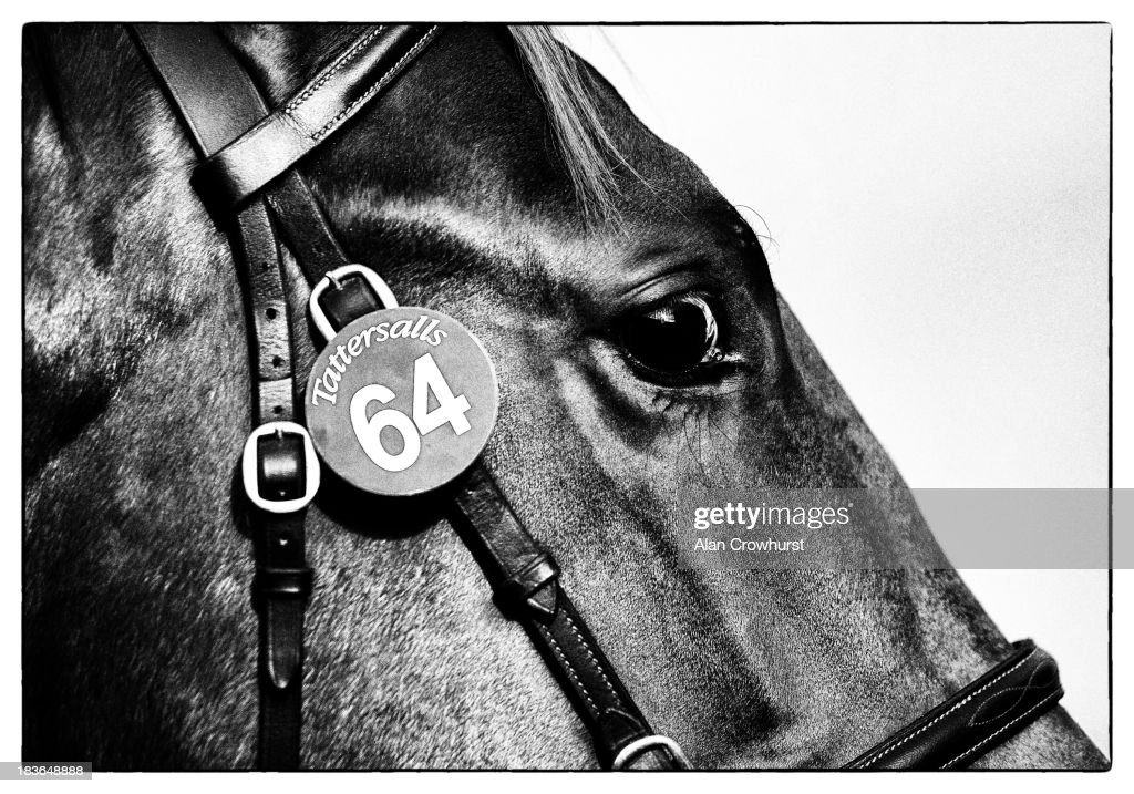 Lot64 waits its turn to enter the sale ring at Tattersalls yearling sales on October 08, 2013 in Newmarket, England.