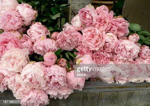 Lots of beautiful, pink peonies in flower shop