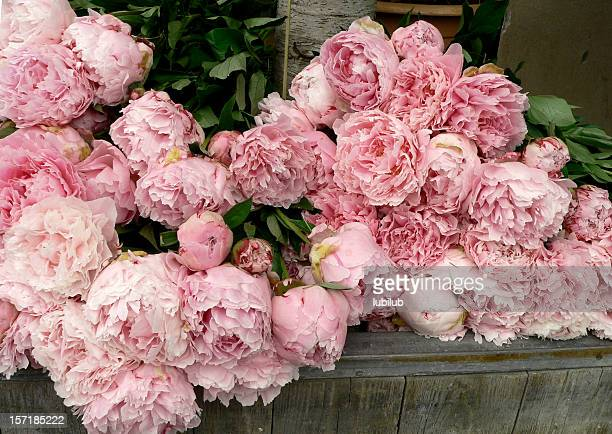 Lots of beautiful, pink peonies in flower shop