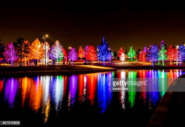 Lots of Christmas trees decorated in colorful lights.