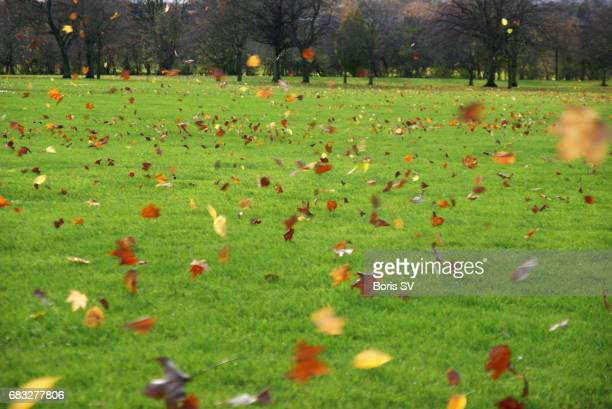 Lots of leaves blown by the strong wind