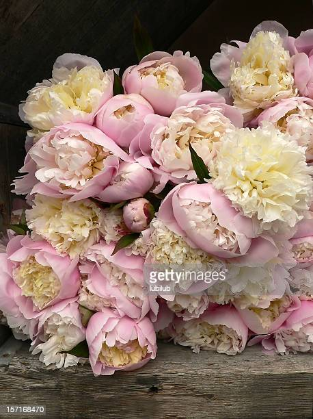 Lots of pink Peonies for sale in Florist's Shop