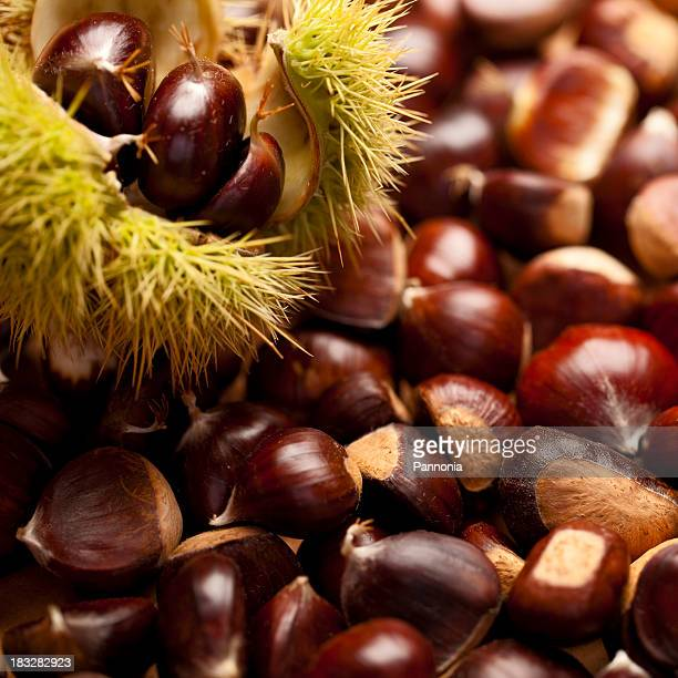 Lots of sweet chestnuts with one whole casing in foreground