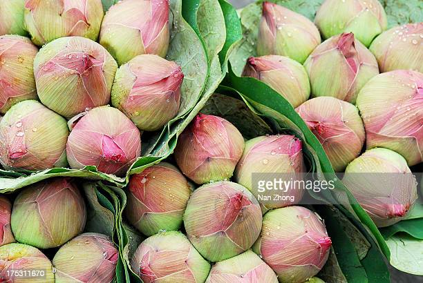 Lotus at Flower Market