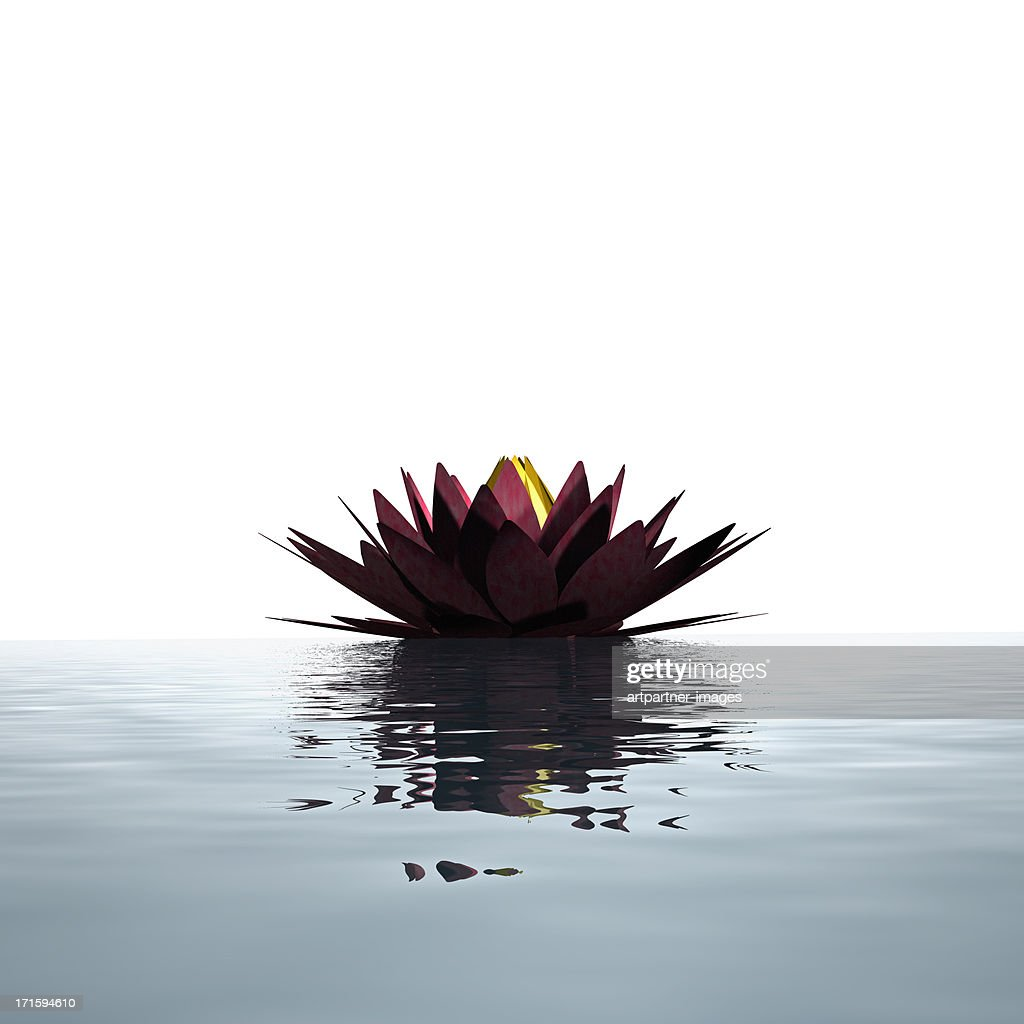 Lotus flower floating on the water surface
