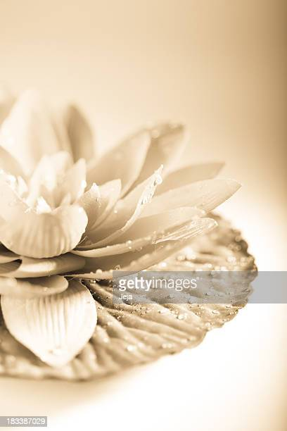 Lotus flower in sepia