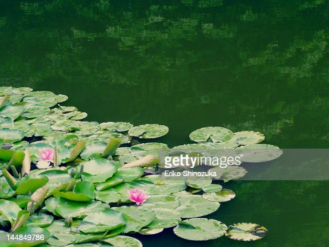 buddhist singles in pond eddy Zoosk is a fun simple way to meet sparrow bush christian single women online interested in dating pond eddy jaydubxx 26, port jervis babymama23 29, port.