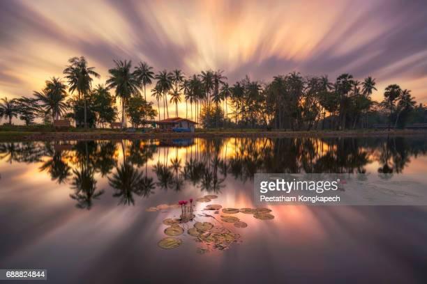 Lotus pond in Nakhon Si Thammarat,Thailand