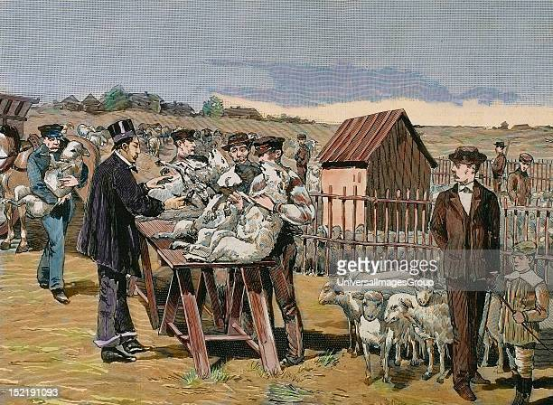 PASTEUR Louis French chemist and bacteriologist Vaccination of sheep against anthrax Agerville Engraving