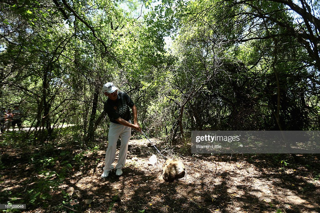 Louis Oosthuizen of South Africa plays out of the bush during the first round of the Nedbank Golf Challenge at the Gary Player Country Club on November 29, 2012 in Sun City, South Africa.