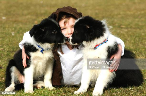 Louise Hinks aged 5 from Shropshire with Border Collie puppies Maisie and Spud at the NEC in preparation for DSL Crufts
