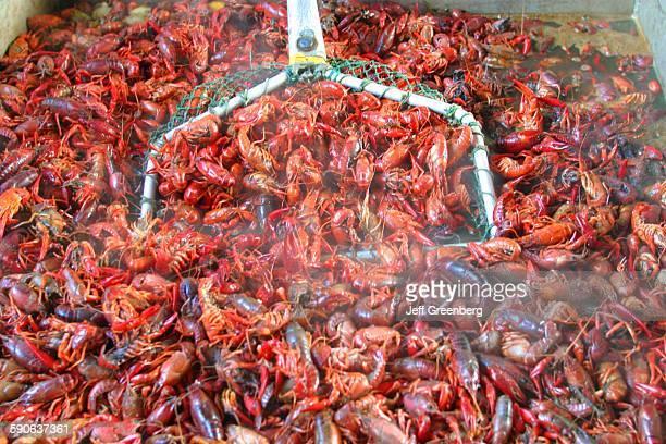 Louisiana Lake Pontchartrain Mandeville Boiled Crawfish