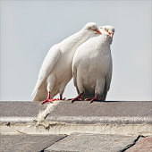 love birds being lovey dovey
