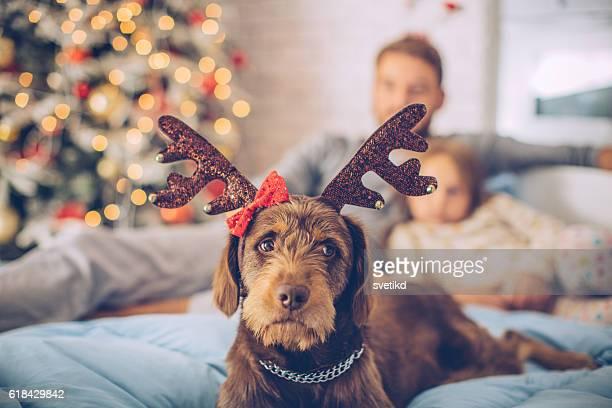 I love Christmas too!
