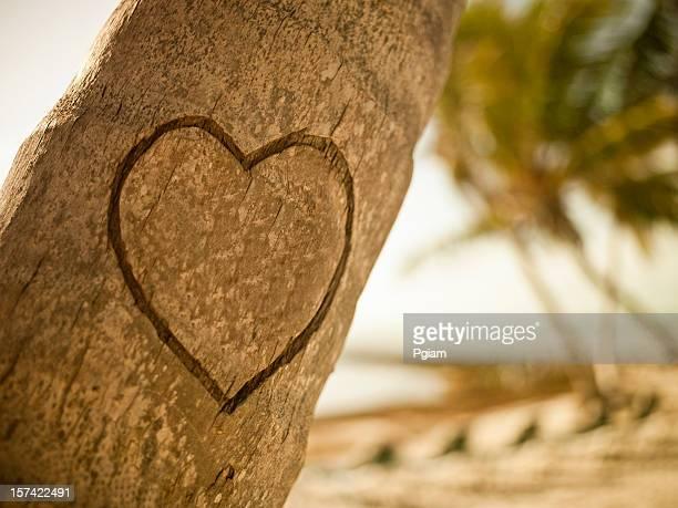 Love affichées sur un palmier