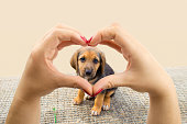 woman making the heart shape with her hands and the puppy dog in the middle