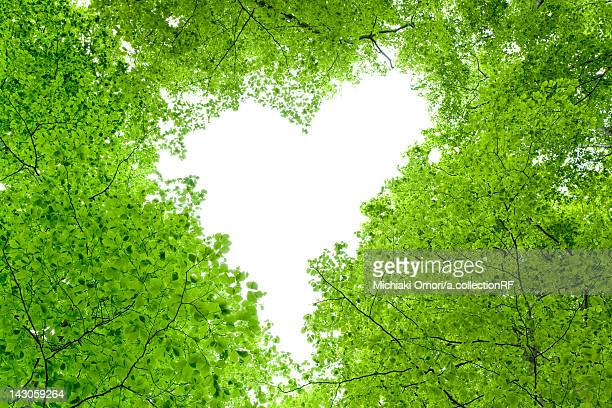 Love Heart in Tree Canopy