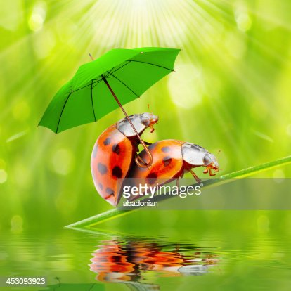 """i love rainy season In all seriousness, i love rainy days they are the only hope for """"real"""" weather  southern california has, so i embrace them and soak them."""